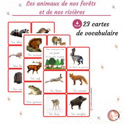 Les animaux de nos forêts...