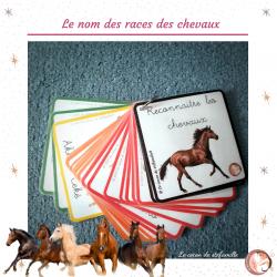 nomenclature races de chevaux